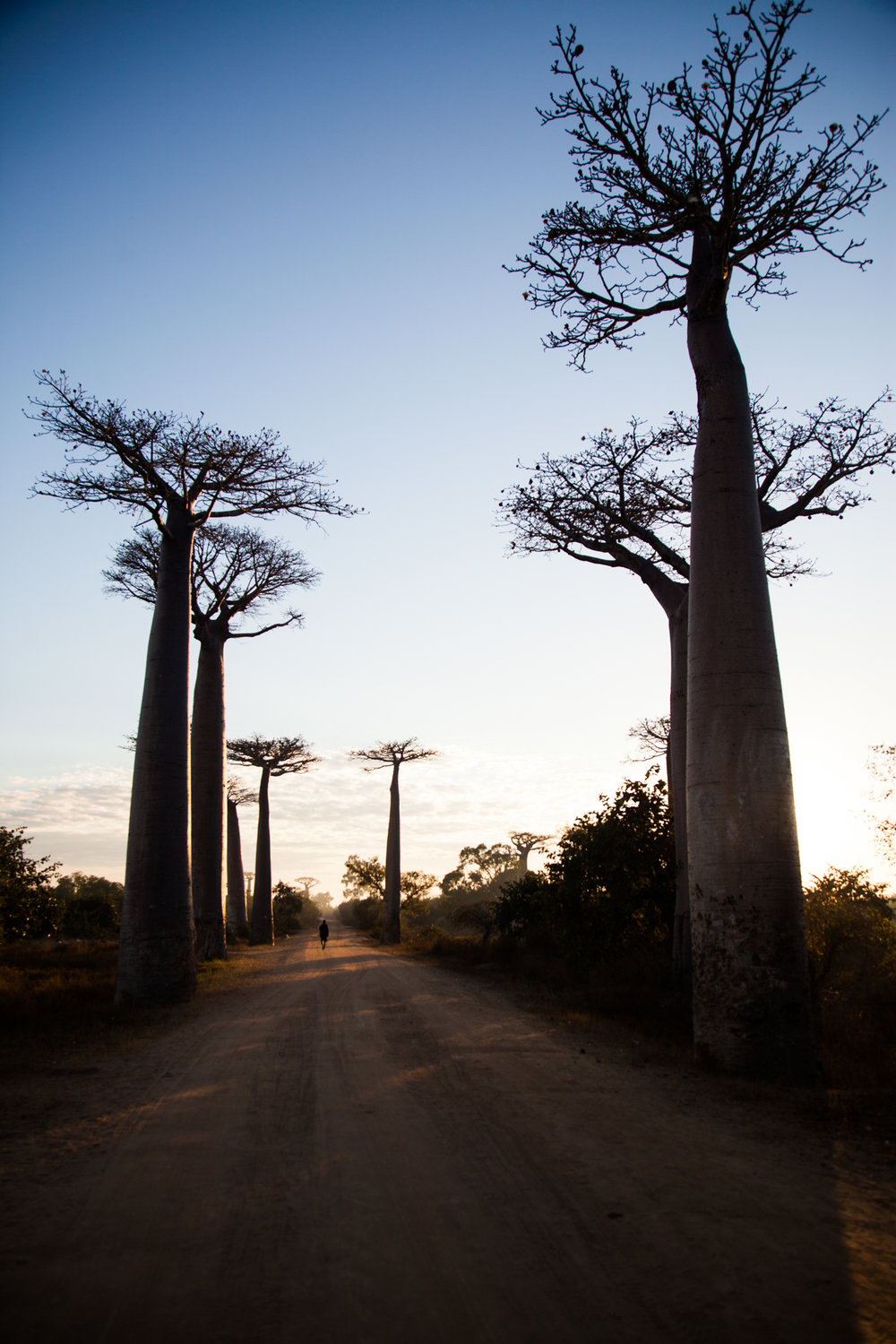 Locals are Proud of their Trees and are glad of the Tourists but Believe These Visitors do not Understand the Cost of Preserving Such a Unique Natural Monument