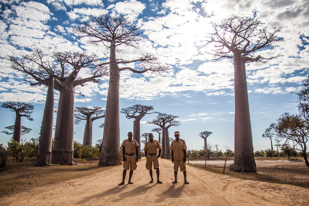 The Largest Trees Survived the Fires but Began to Collapse in the Wet Soils of the Rice Paddies Leading to the Formation of a Locally Run Conservation Programme
