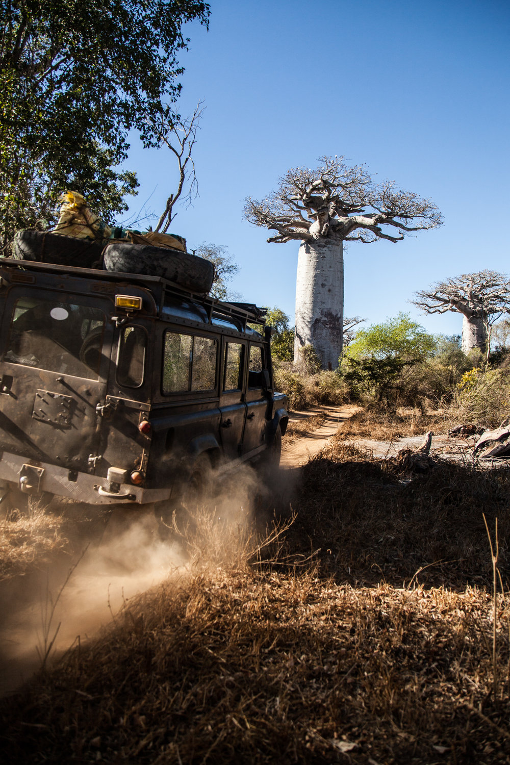 The Western Forests are Studded with Baobabs