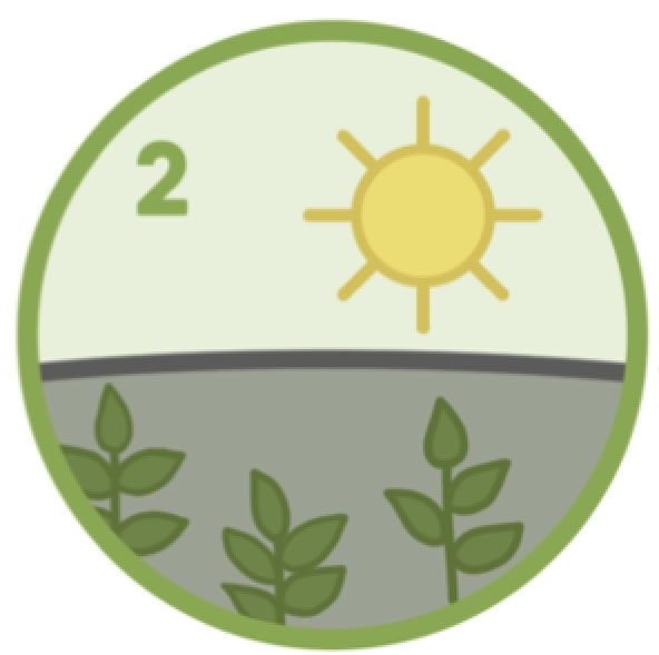 2. Shaded for added nutrients - Before the leaves are harvested in the Spring they are shaded under giant canopies for 30 days. This increases their chlorophyll & antioxidant content.