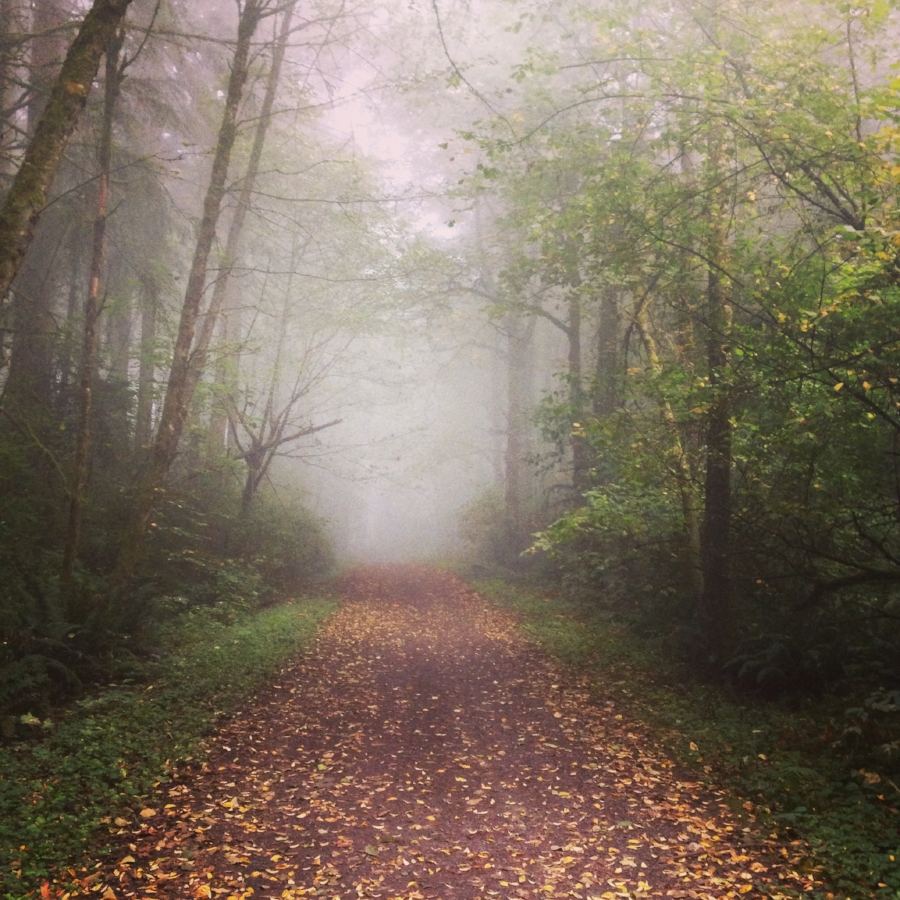 Portland Therapy: path