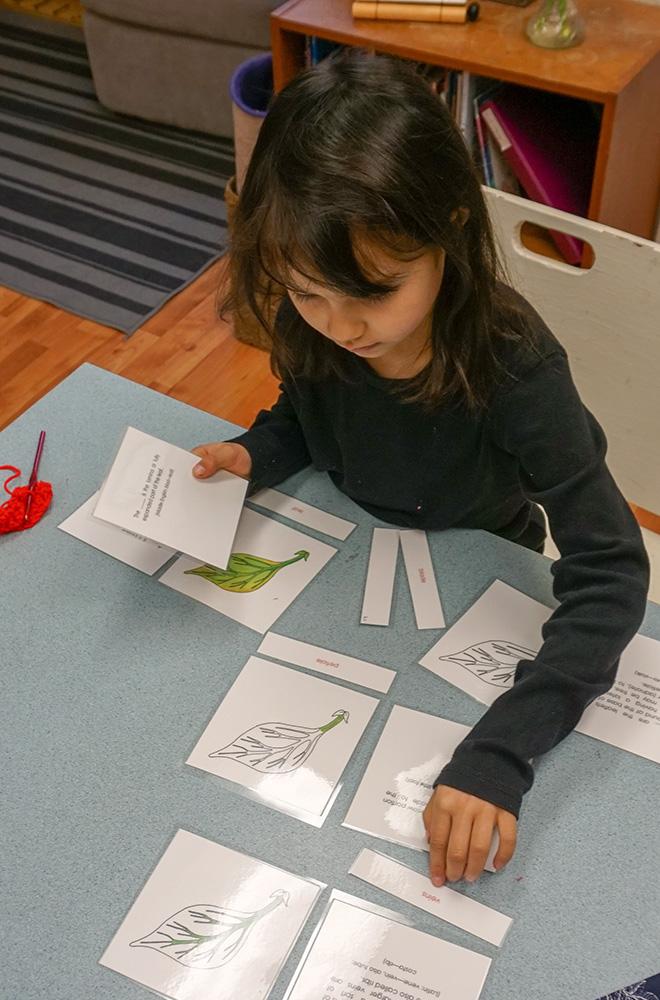3-mcminnville-montessori-school-elementary-slideshow.jpg
