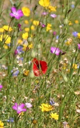 assorted wildflowers 2.jpg