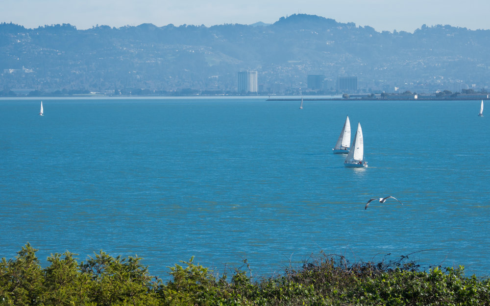 The beautiful sailboats in the bay around Alcatraz Island