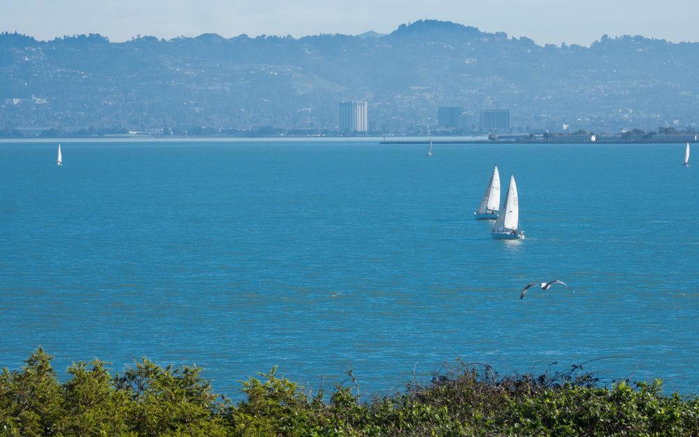The beautiful sailboats in the bay around Alcatraz Island