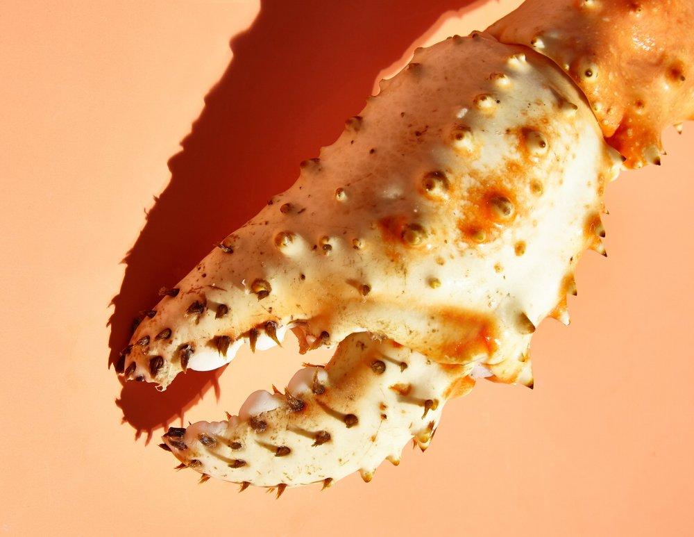 Crab Big Claw9.jpg