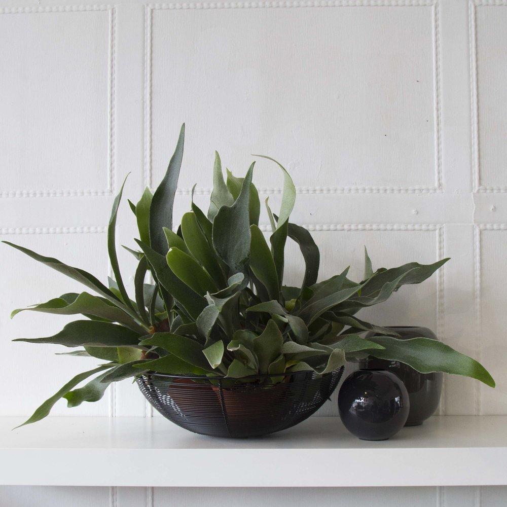 Broste Lindi and Viola vases