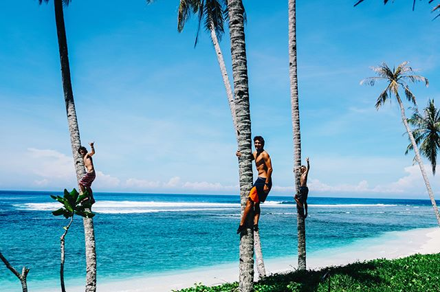 That's how to turn 22 🎉🎉🎉🏄🏄🏄 thanks to our beautiful planet 🌎 #birthdaypresent #lovenature #paradise #palmtree #blueocean #travelgram #traveltheworld #goodfriends #getaway #surf #drone #mavic #fromabove #arielphotography #surfphotography #hollowtrees #mentawai #indo #travelindonesia