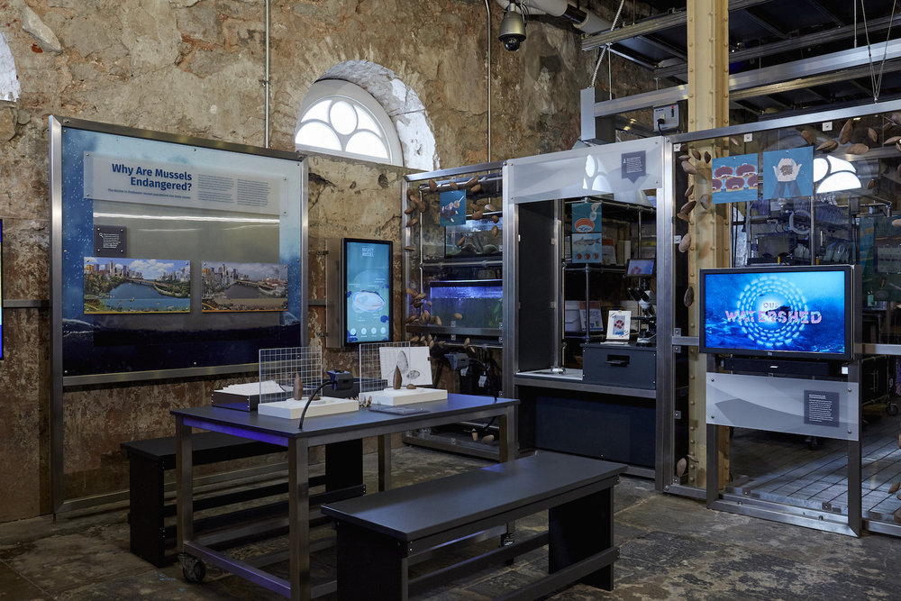 The Mussel Hatchery employs a wide range of dynamic interactive elements, both digital and analog, which delight the mind and encourage playful, associative and critical thinking.