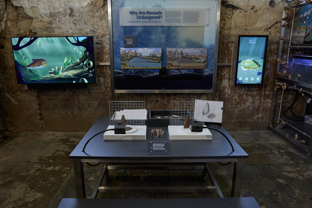 "Drawing and microscope stations provide opportunities for careful observation at the Mussel Hatchery, while the animated short ""Mussels in the Wild"" plays behind."