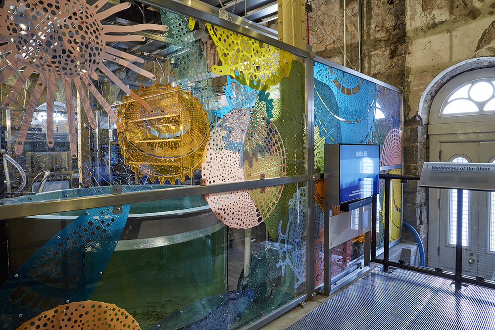Diatom Lace, a transparent mural by Stacy Levy, uses colorful enlargements of microscopic diatoms to enclose the Living Laboratory at the Mussel Hatchery.