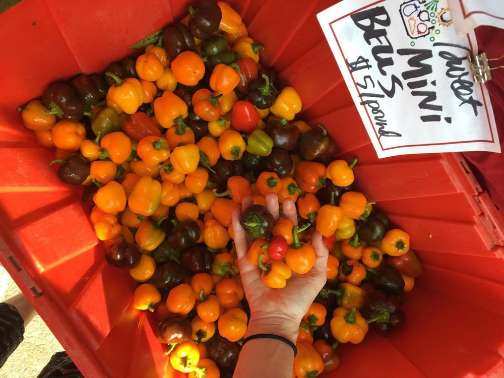 Mini Bell Peppers- Burlington Farmers Market