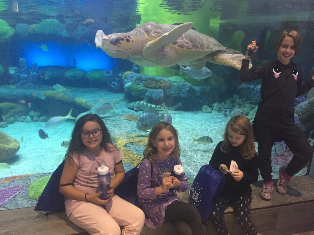 Girl Scout Aquarium Sleepover!