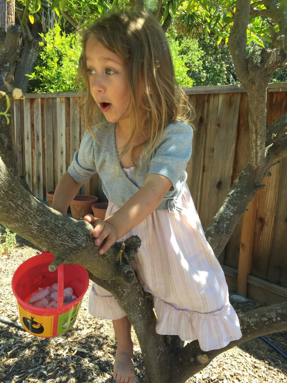 Maia discovered the fun of the orange tree! She made nests out of pebbles for her pet dragon. And there were gems that were actually dragon eggs!