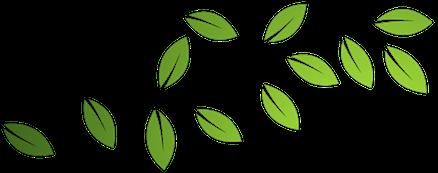 Leaves Crop.png