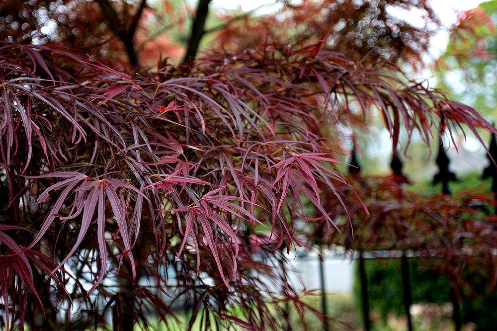 Mustang-Landscape-Garden-Design-Victoria-BC-Trees-Plants.jpg
