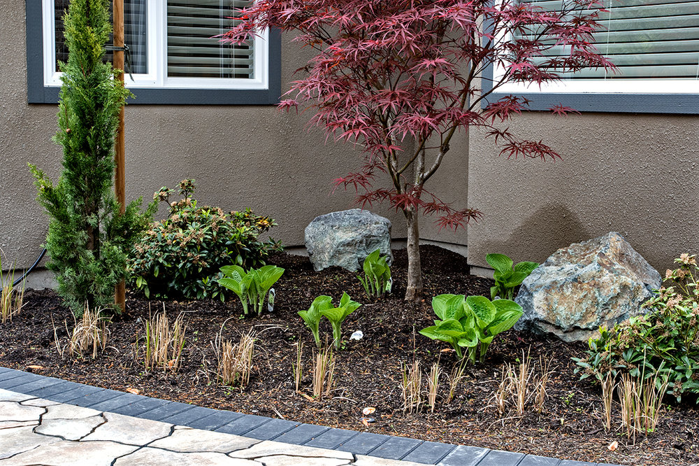 Mustang-Landscape-Garden-Design-Victoria-BC-Trees-Flowers.jpg