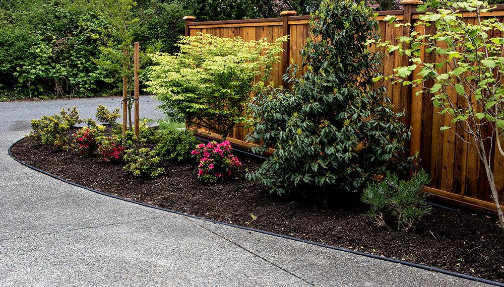 Mustang-Landscape-Garden-Design-Victoria-BC-Trees-Path.jpg