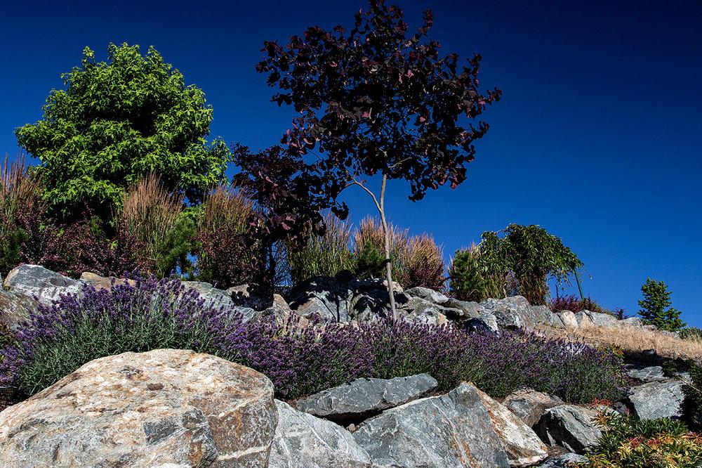 Cliffside garden-MustangLandscape-Victoria-BC-flowers.jpg