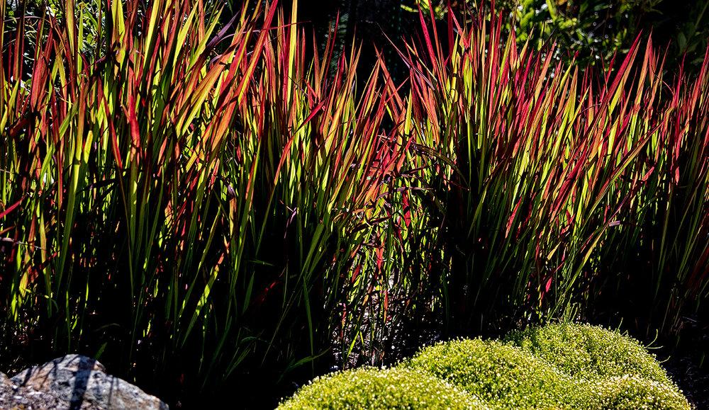 Cliffside garden-MustangLandscape-Victoria-BC-garden-16 (1).jpg
