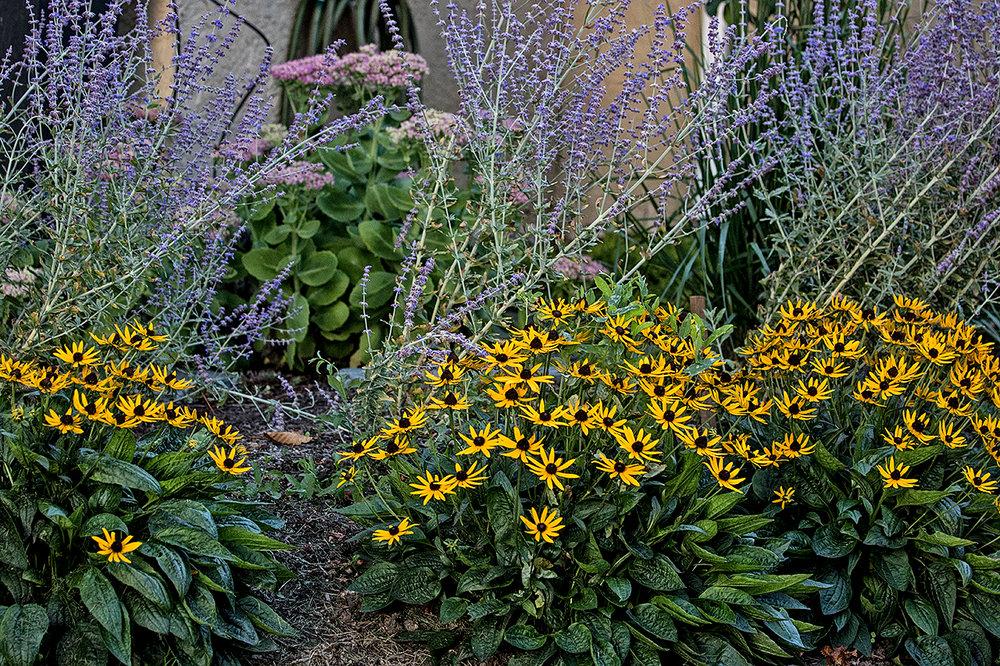 charming-simplicity-MustangLandscape-Victoria-BC-garden-flowers-shrubs.jpg