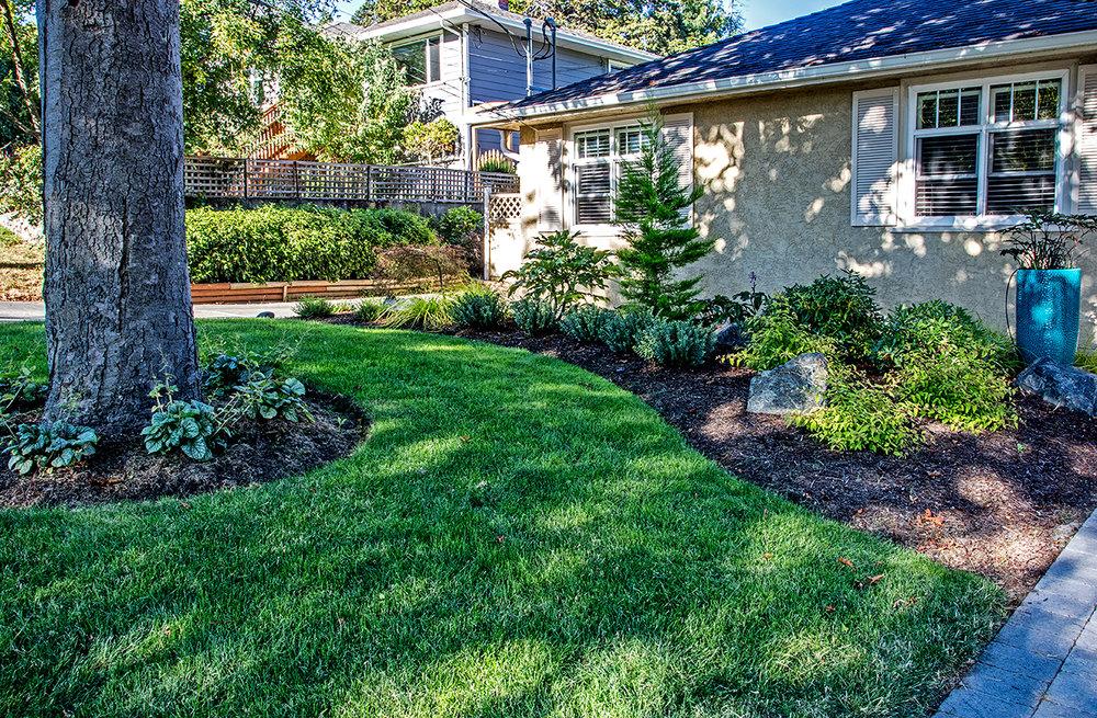 charming-simplicity-MustangLandscape-Victoria-BC-garden-tree.jpg