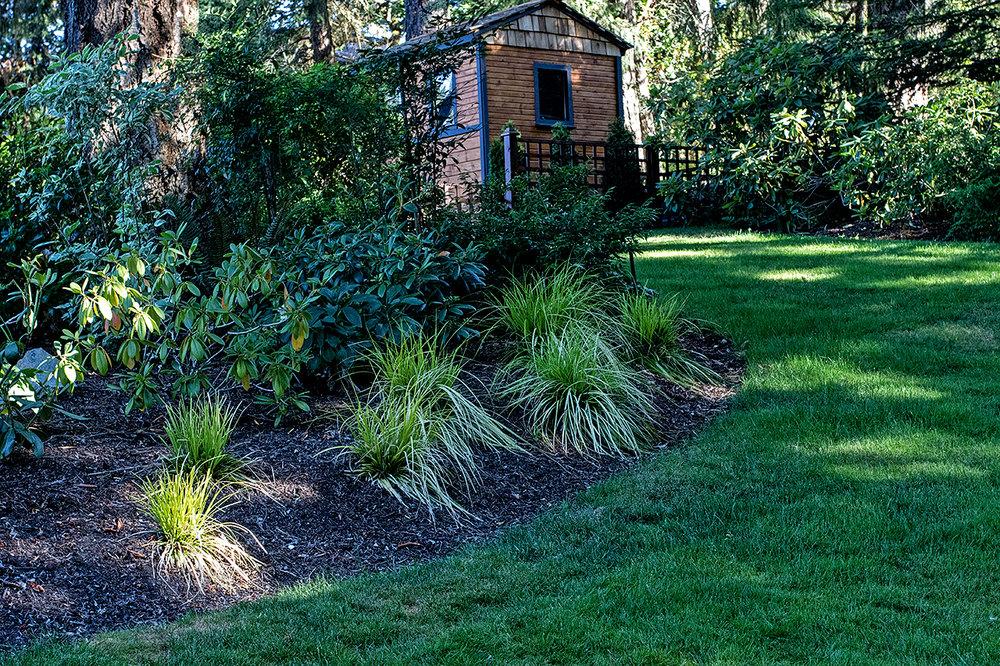 Woodland garden-MustangLandscape-Victoria-BC-garden-shed.jpg