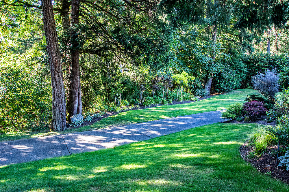 Woodland garden-MustangLandscape-Victoria-BC-garden-trees.jpg