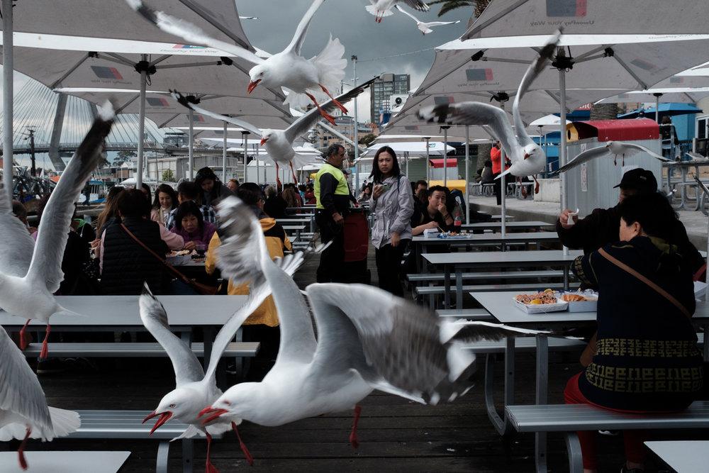 04_Jonathan_Pui_australian_street_photography_Sydney_Seagulls_Aussie_Street_Sydney_fish_markets_.JPG