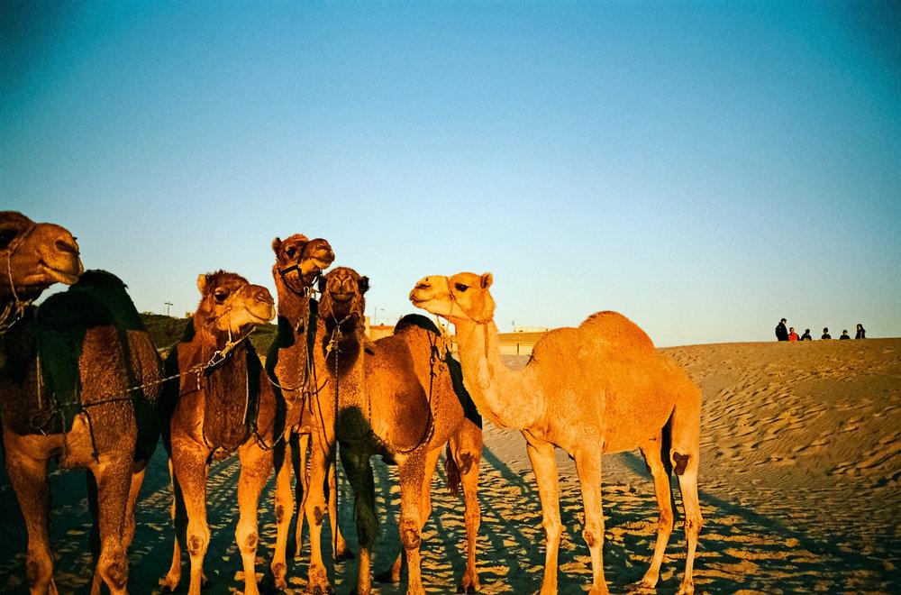 003_didi-s_gilson_australian_beach_photography_street_candid_camels_people_portstephens_birubi_sunlight_film_sunset_sand_vignette_2018_01.jpg