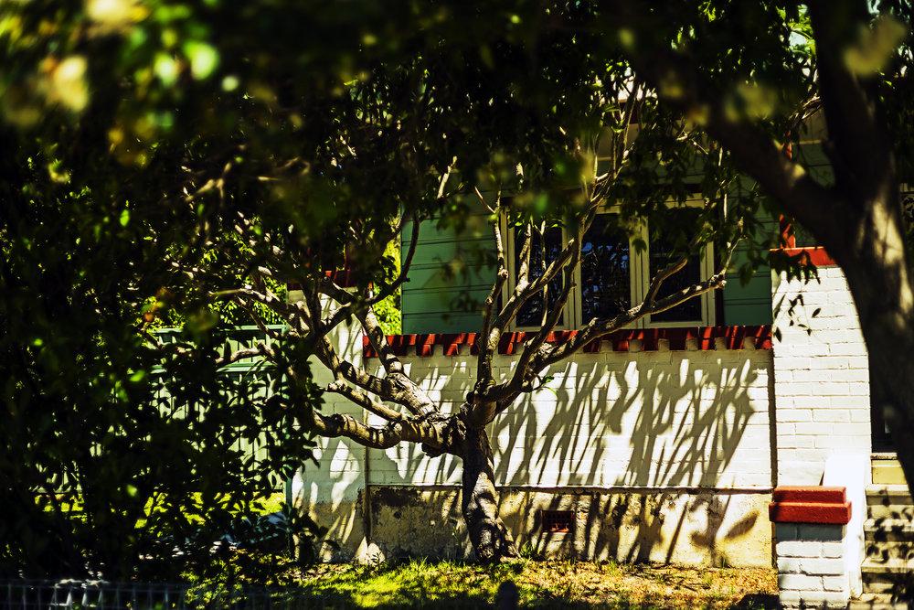 005_didi-s_gilson_australian_street_photography_kurrikurri_tree_house-sunlight_shadows_2018.jpg