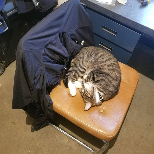 Cold, wet, nasty day and our barn cat is hard at work guarding the warm office...