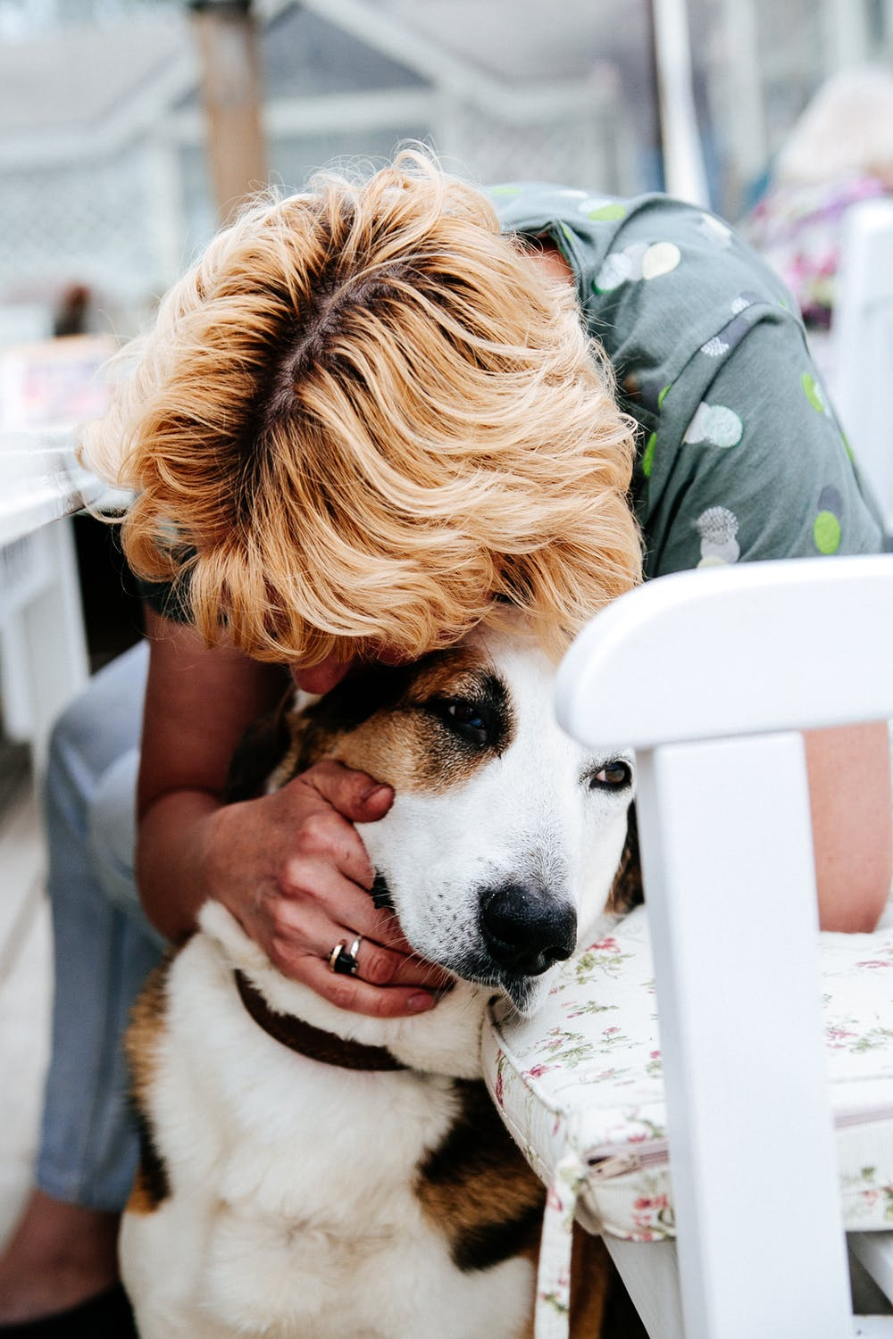Emotional Support Animal Training And Certification Companion Dog