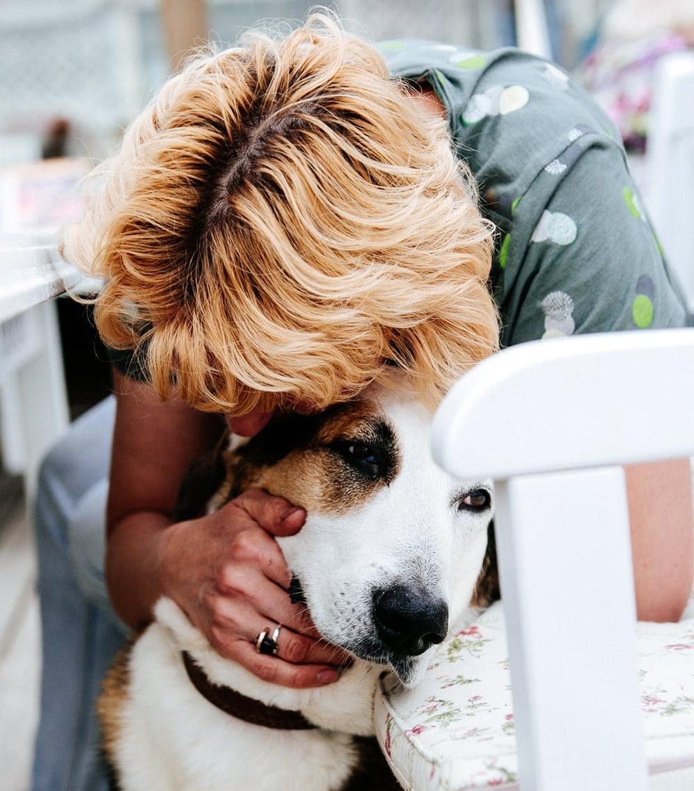 Emotional Support Dog Training Certification Companion Dog