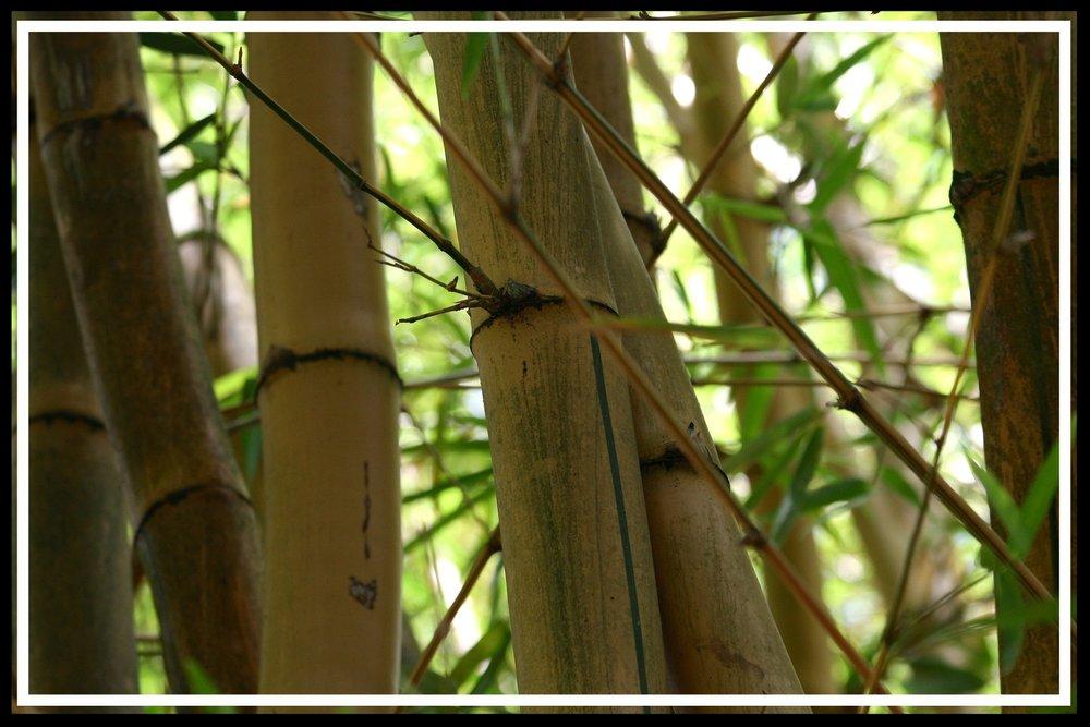 bamboo-780862_1920.jpg