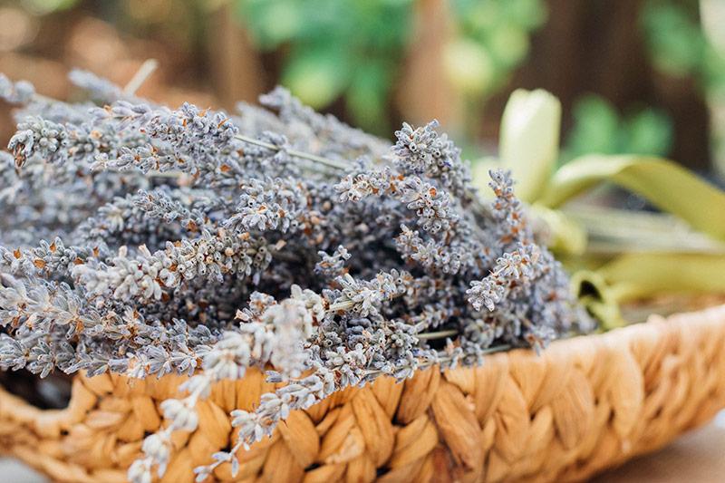 My Toolkit Medicinal Herbs Sara Knight The Gut Clinic Newcastle Naturopath and Herbalist New Lambton