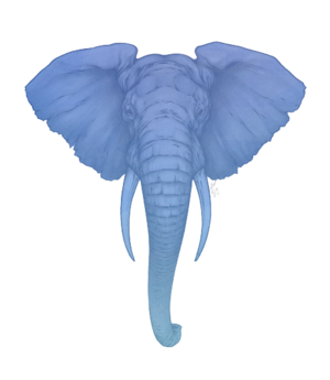 Elephant-Thinking2.png