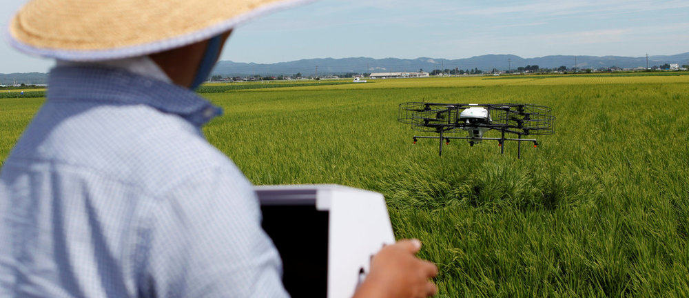 Japanese farmer sprays his rice crops with a drone.