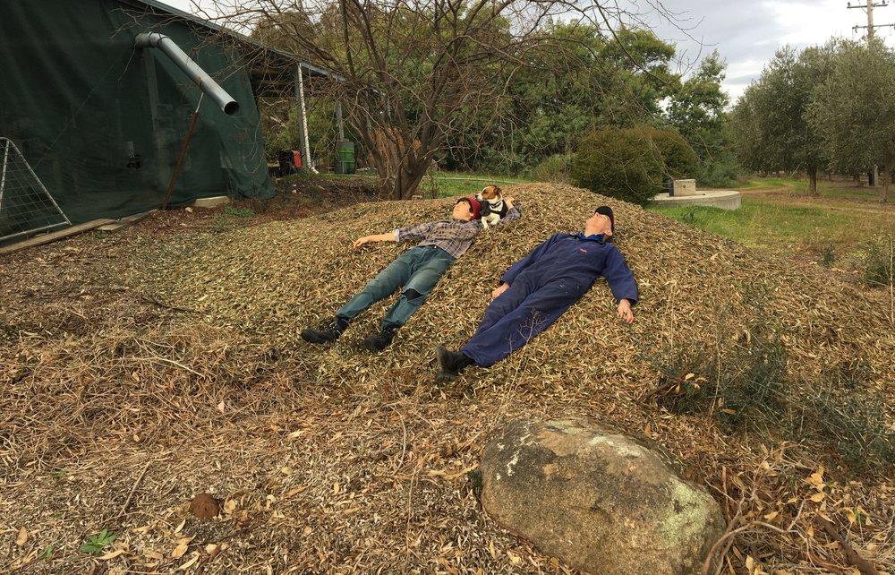Buggered! Lying on the olive leaf mountain.jpg
