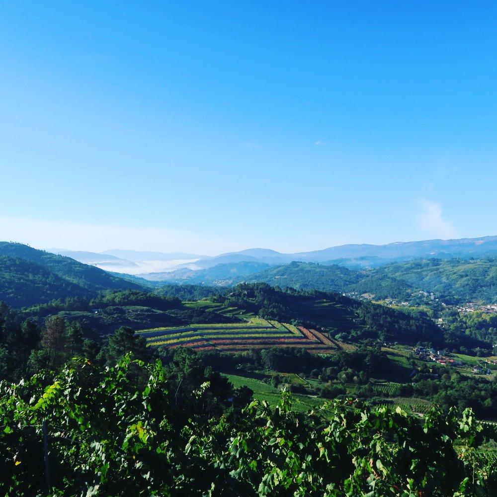 Coto de Gomariz_vineyards.JPG