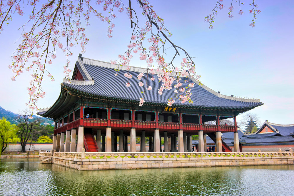 Anjo Miranda, Gyeongbokgung Cherry Blossoms.jpg