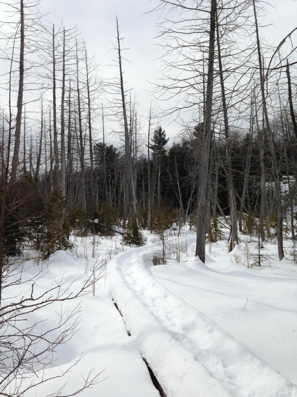 Snowshoe Tracks Across the Marsh Boardwalk