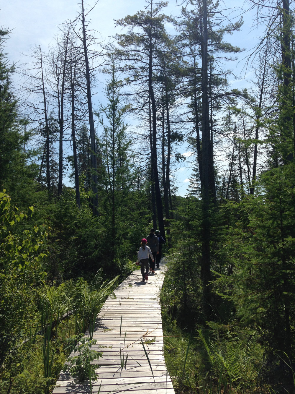Enjoy a Leisurely Hike in the Heart of Nature