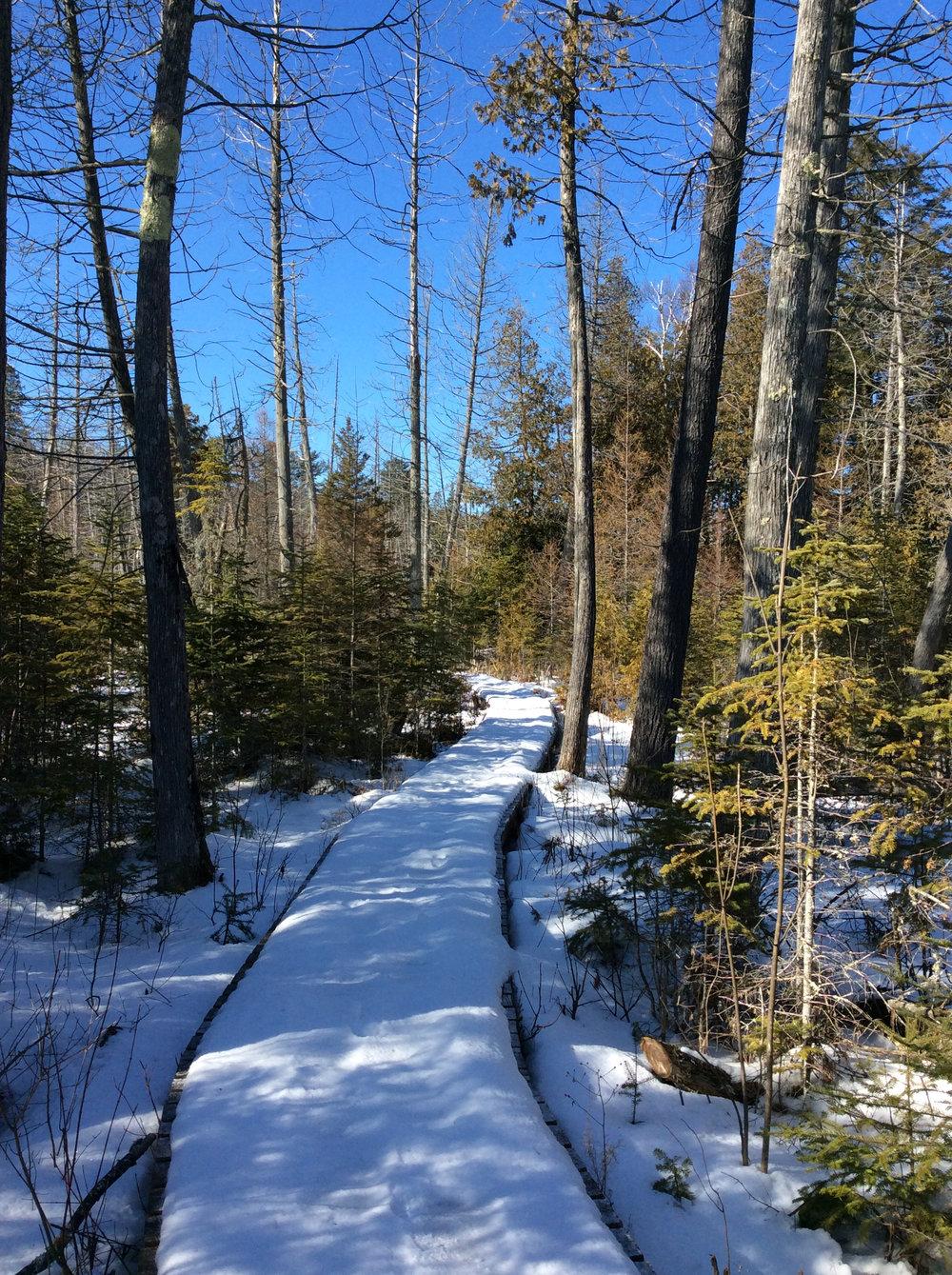 Boardwalks in Winter