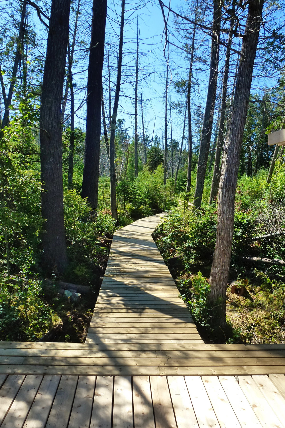 Our Boardwalk to Mud Lake at The Bear Stand