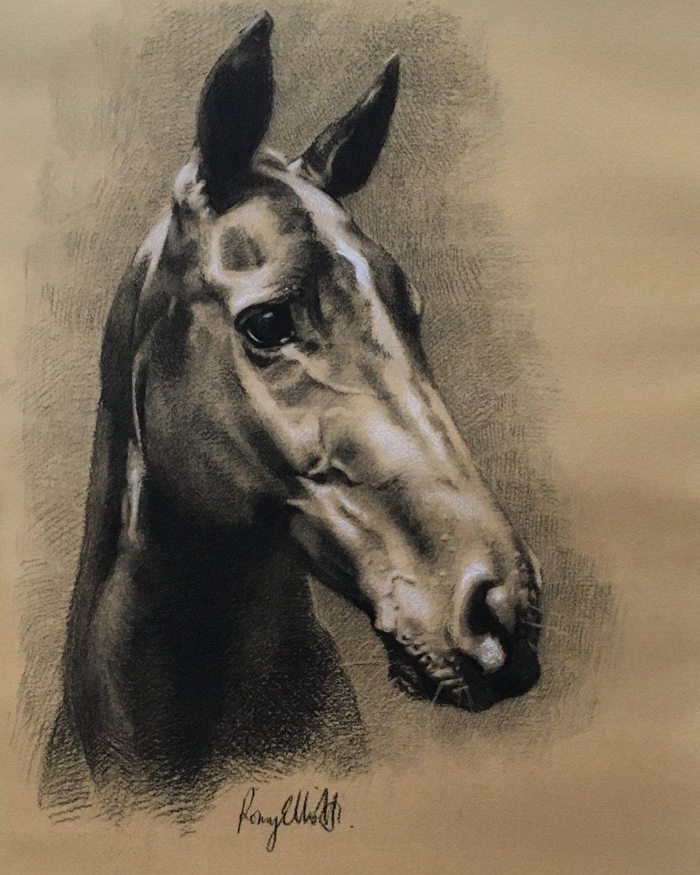 Polo pony, Esmerelda. Charcoal and white chalk