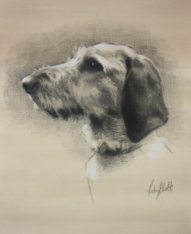 Basset Fauve de Bretagne. Charcoal and white chalk
