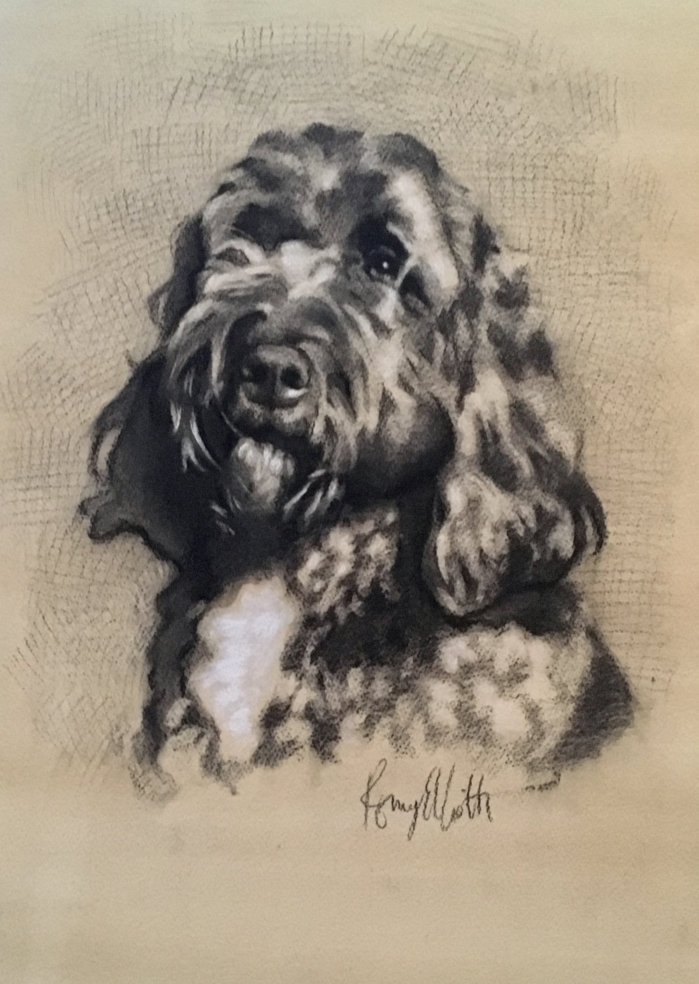 Black Cockerpoo, Henry. Charcoal and chalk