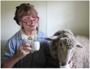 My Friend Jane Dyer and her Sheep.jpg