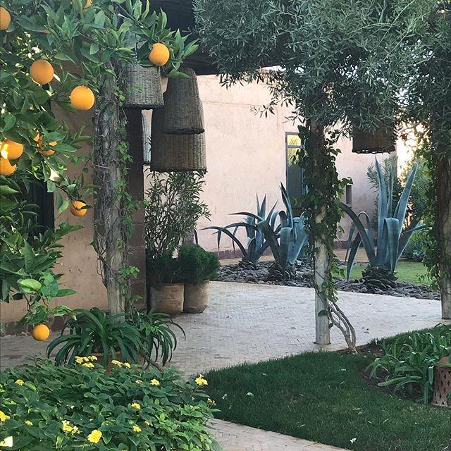 What a great view, amazing way to start the day! . . . . . #marrakech #travelmarrakech #marrakechdecor #interiordesign #interiordesigner #interior123 #interiors4all #deco #homedeco #travel #thesourcemarrakech